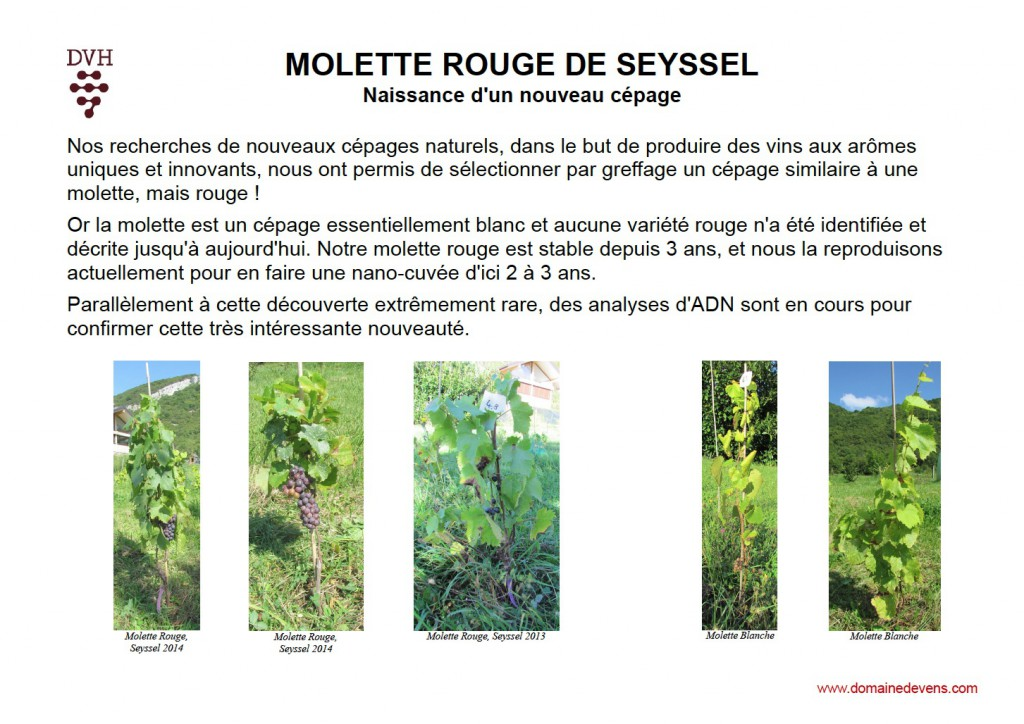 Molette rouge Seyssel