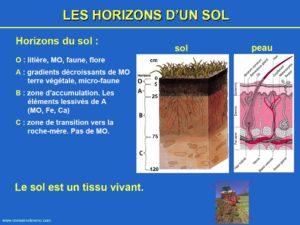 Les couches du sol et ceux de la peau
